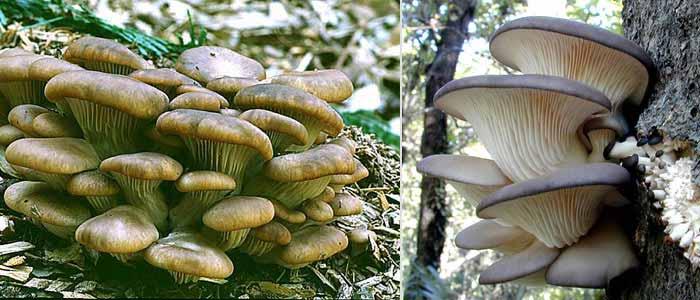 growing mushrooms the easy way - Enteogenic Mushrooms - philosophy