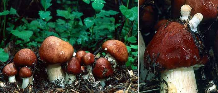 growing mushrooms the easy way - Enteogenic Mushrooms