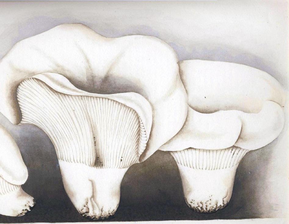 mushrooms russia and history - Enteogenic Mushrooms