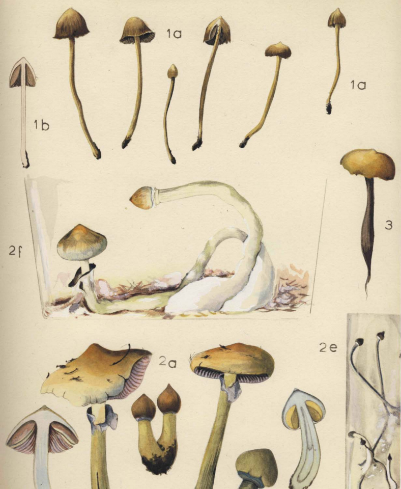 mushrooms russia and history - Enteogenic Mushrooms