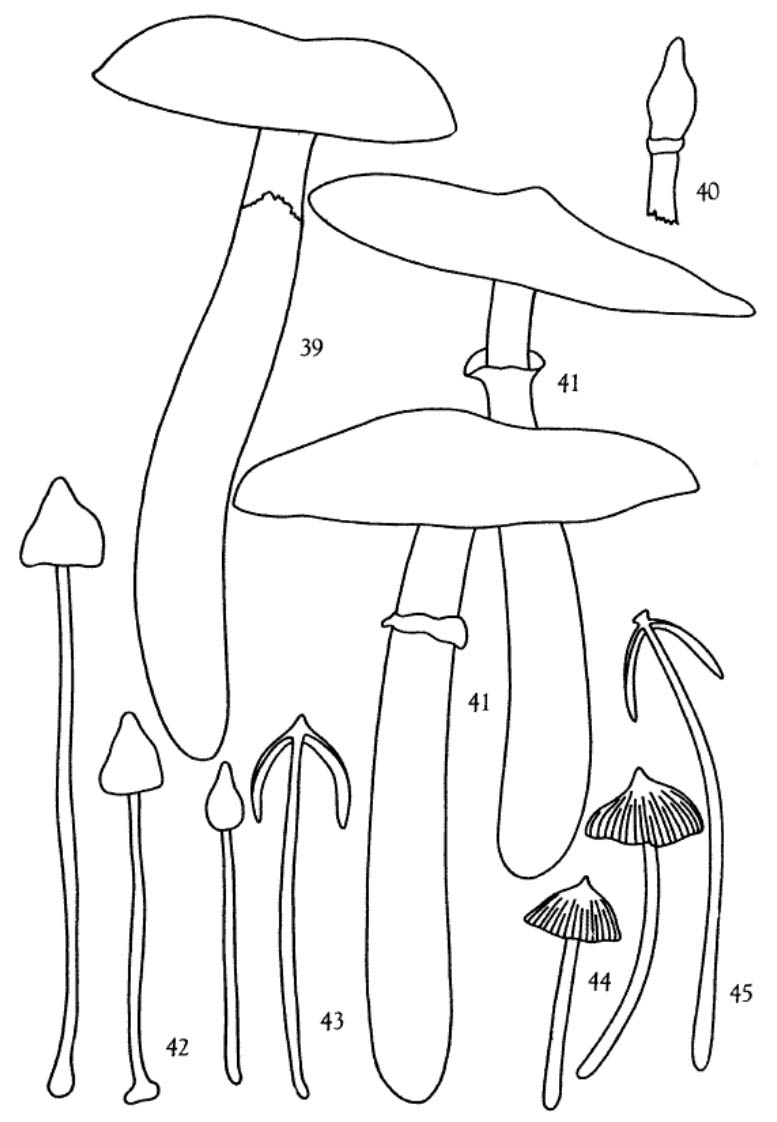 mycological investigations on teonanacatl the mexican