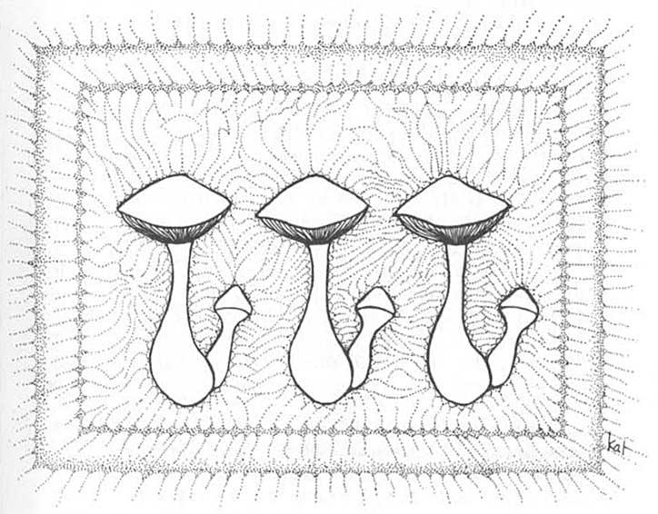 psilocybin magic mushrooms growers guide - Enteogenic